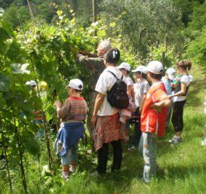 bambini-estate-con-noi-in-fattoria-2-300x283 Bambini: 'estate con noi' in fattoria