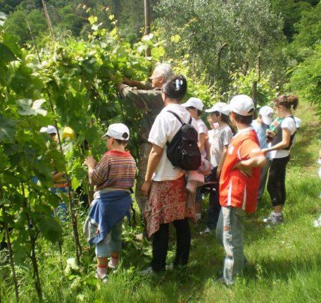 Bambini: 'estate con noi' in fattoria